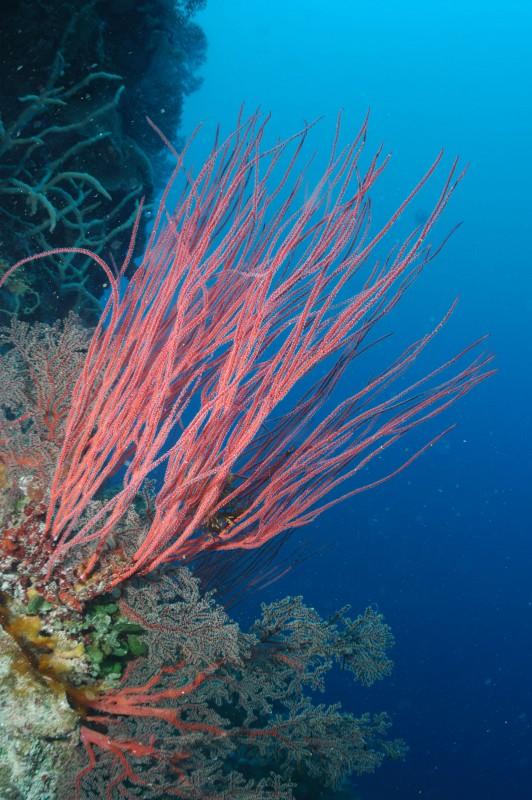 这片海7种颜色