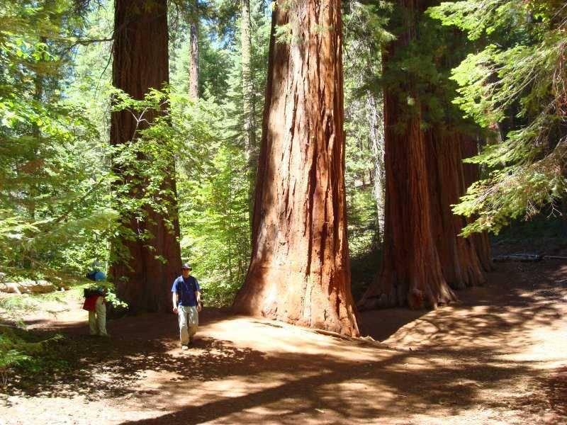美国加州红杉树国家公园
