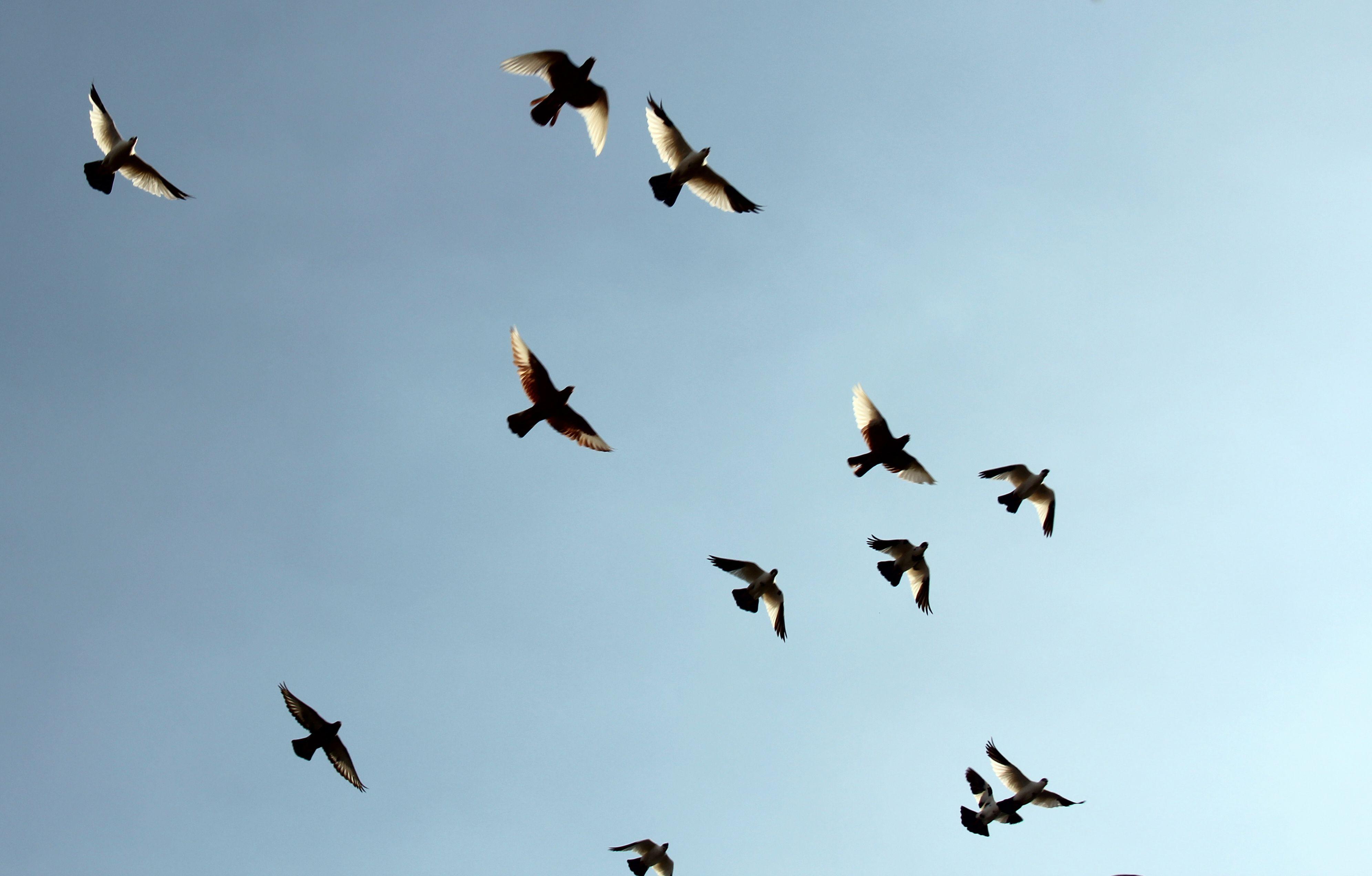 动物 鸟 鸟类 3983