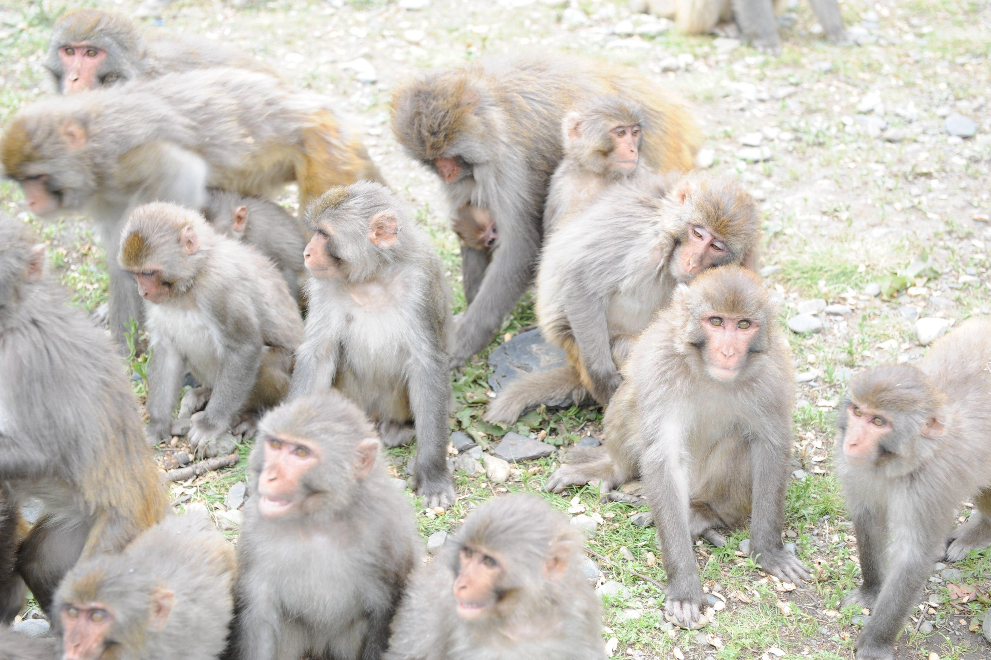 猴子很温顺 很可爱