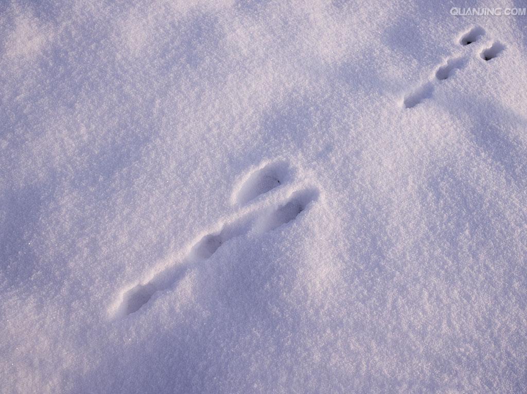 兔子和松鼠的脚印