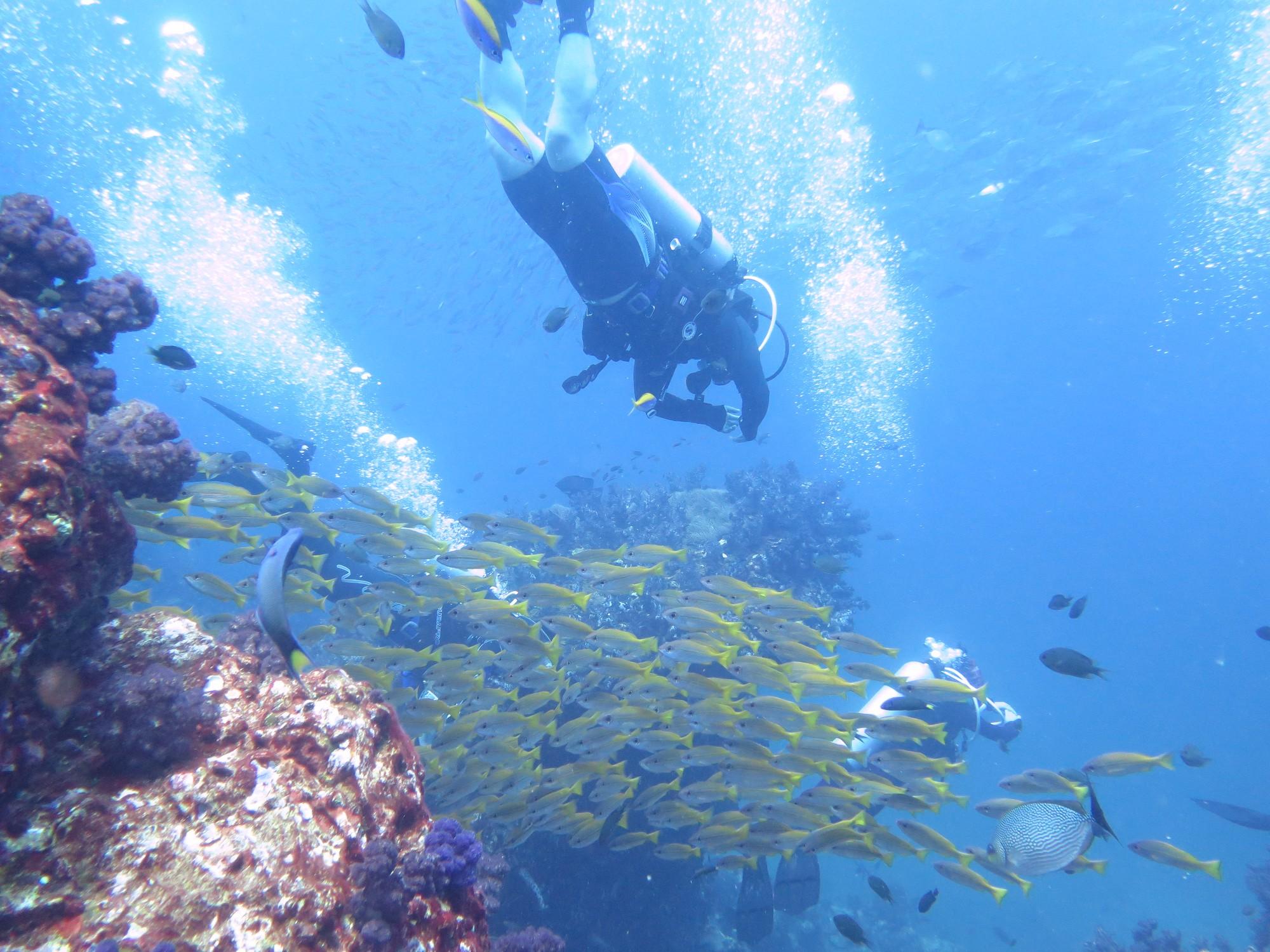 斯米兰群岛船宿潜水归来