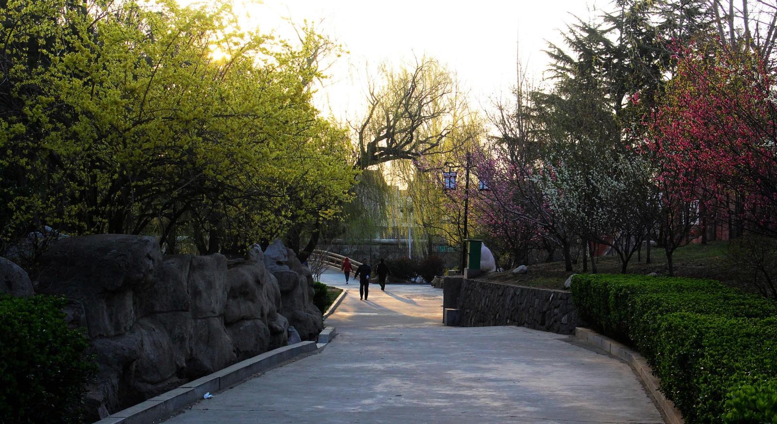 清晨的月湖公园-青岛-山东-绿野户外网