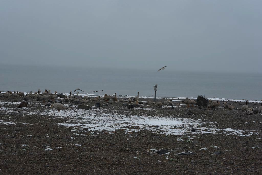 鸟岛 137.jpg