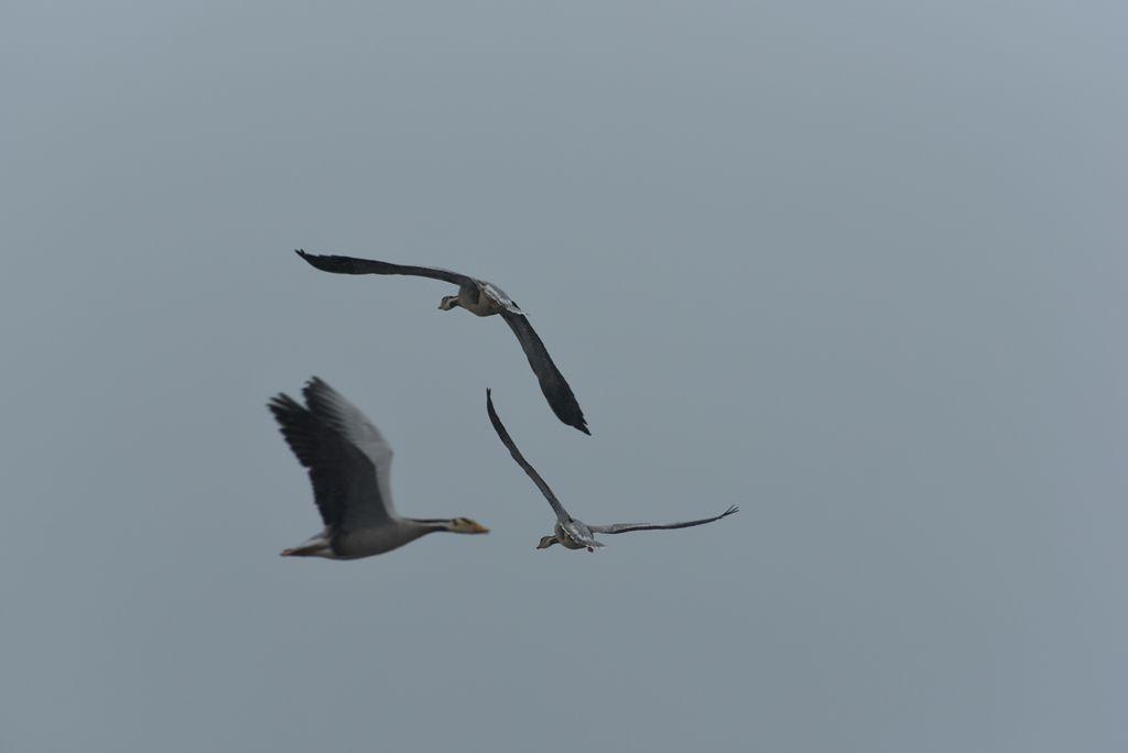 鸟岛 135.jpg