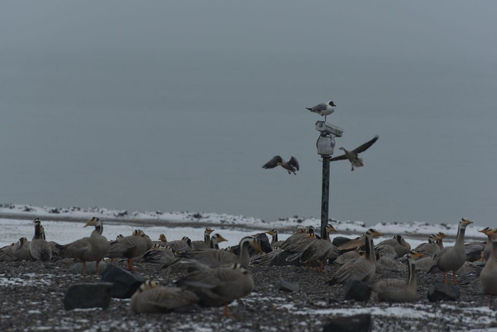 鸟岛 131.jpg