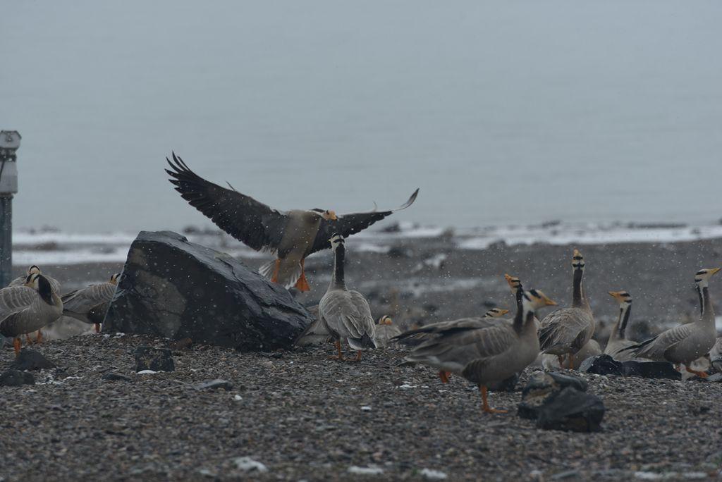 鸟岛 184.jpg