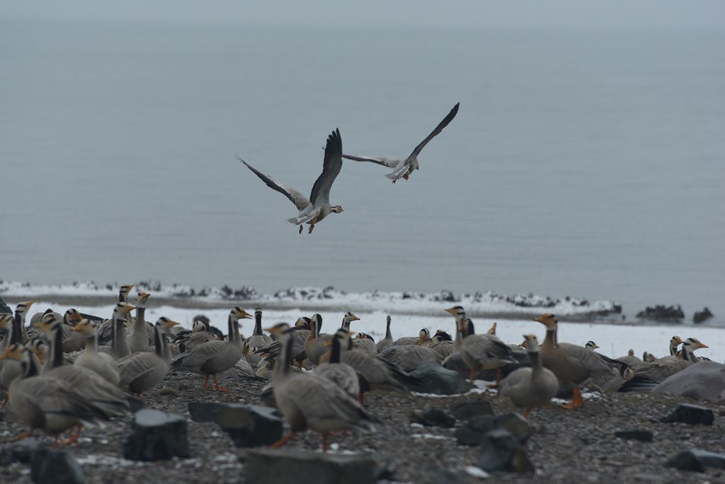 鸟岛 179.jpg