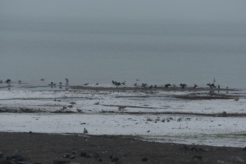 鸟岛 178.jpg
