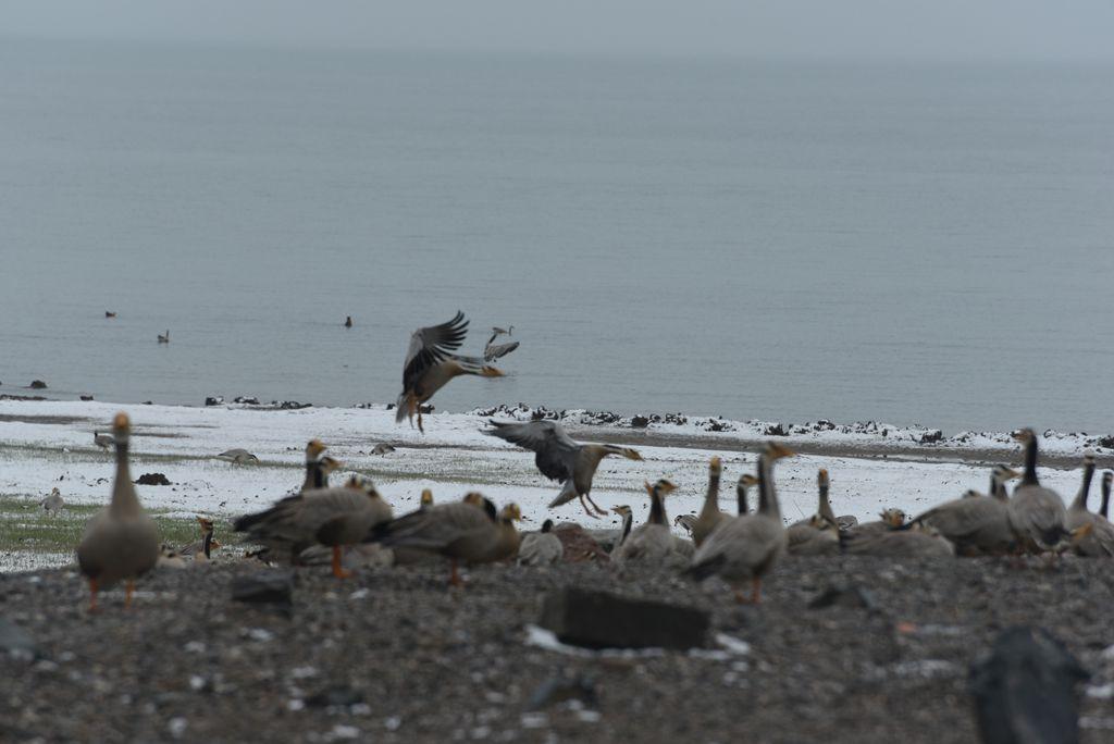 鸟岛 173.jpg