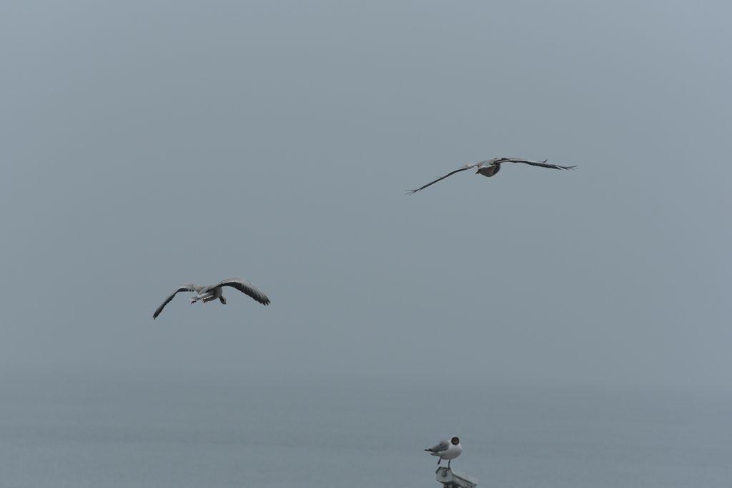 鸟岛 143.jpg