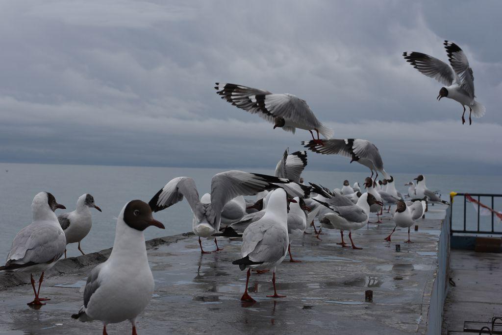 鸟岛 229.jpg