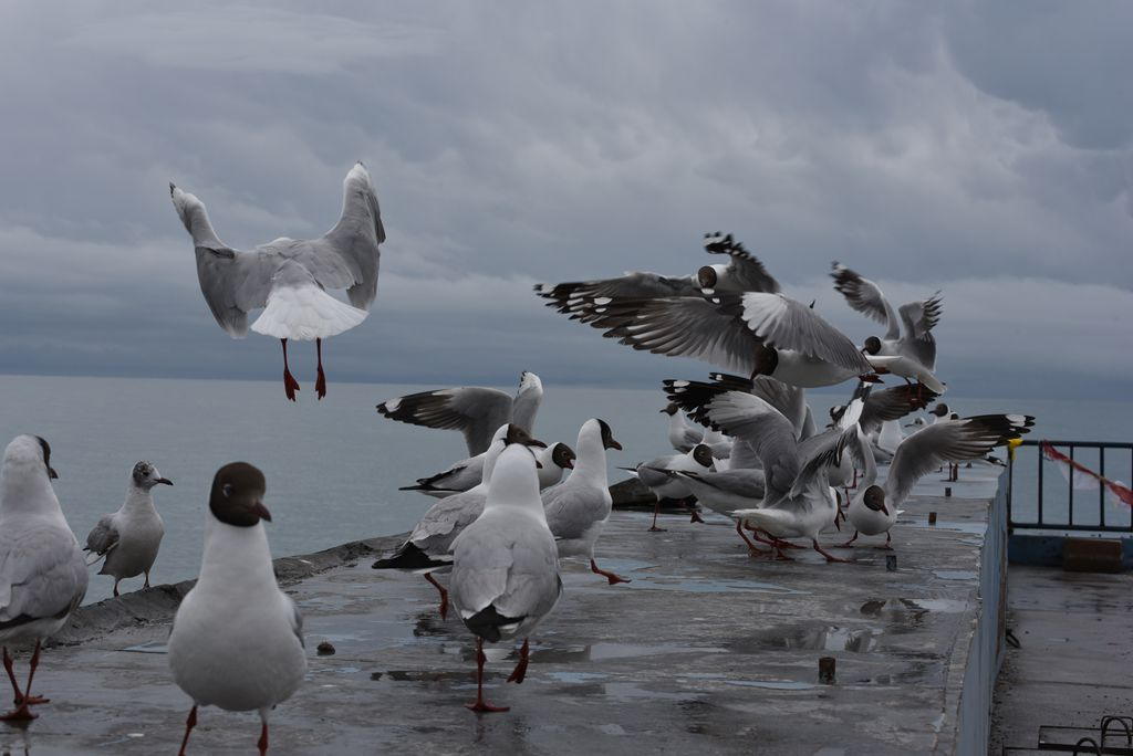 鸟岛 228.jpg