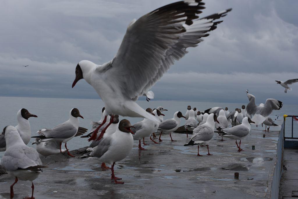 鸟岛 227.jpg
