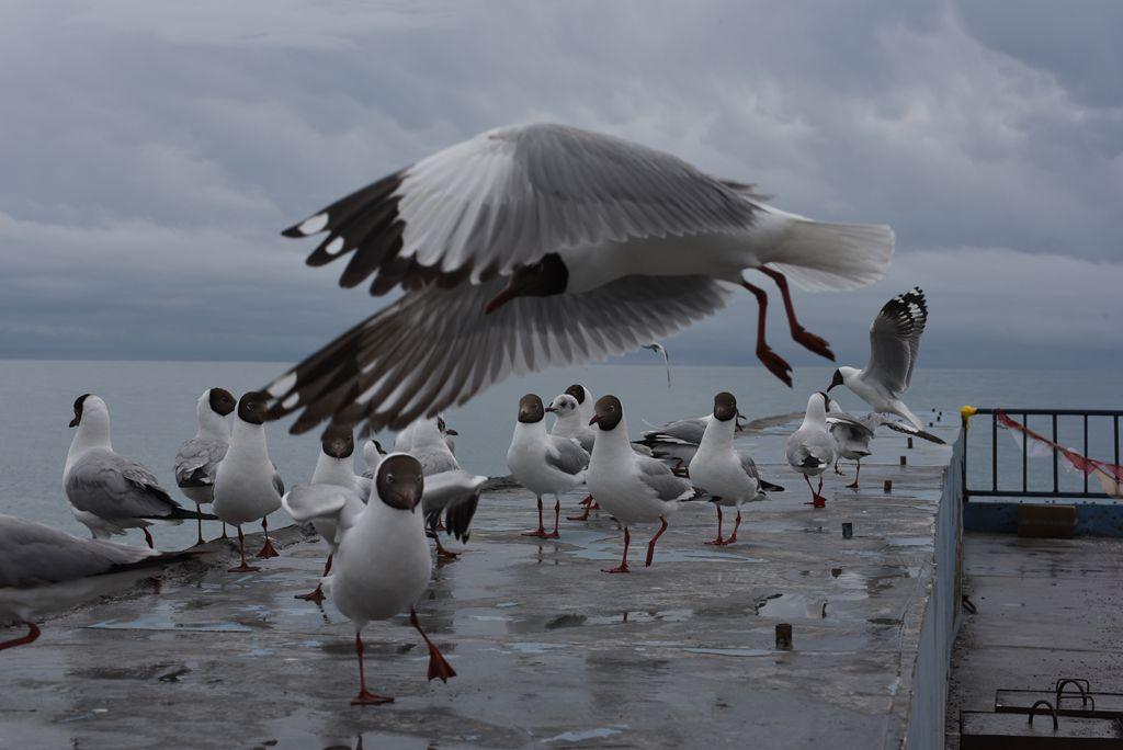 鸟岛 225.jpg