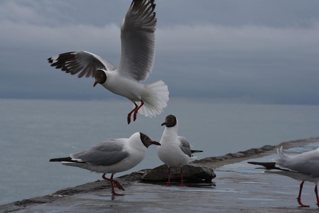 鸟岛 218.jpg