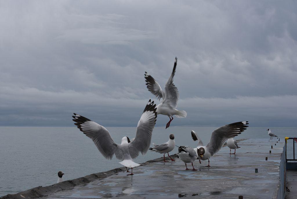鸟岛 220.jpg