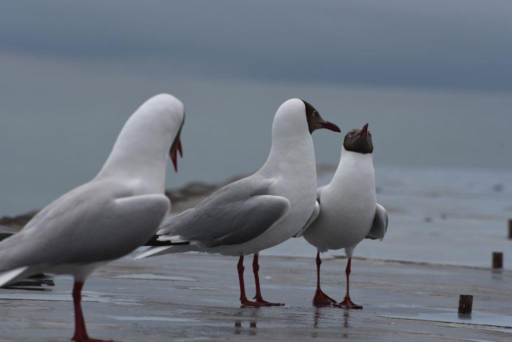 鸟岛 213.jpg