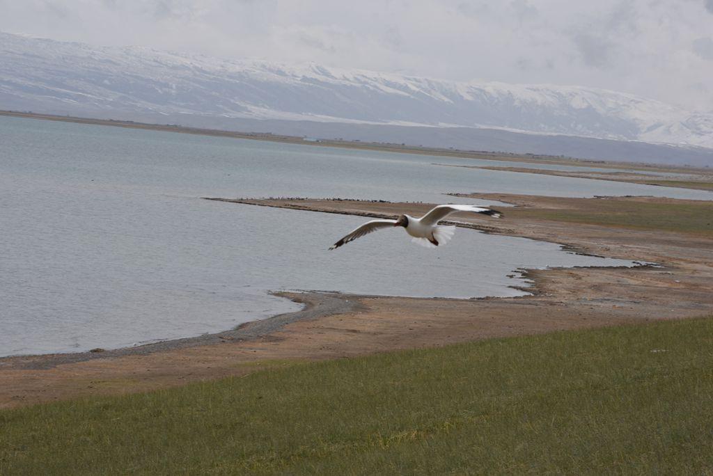 鸟岛 290.jpg