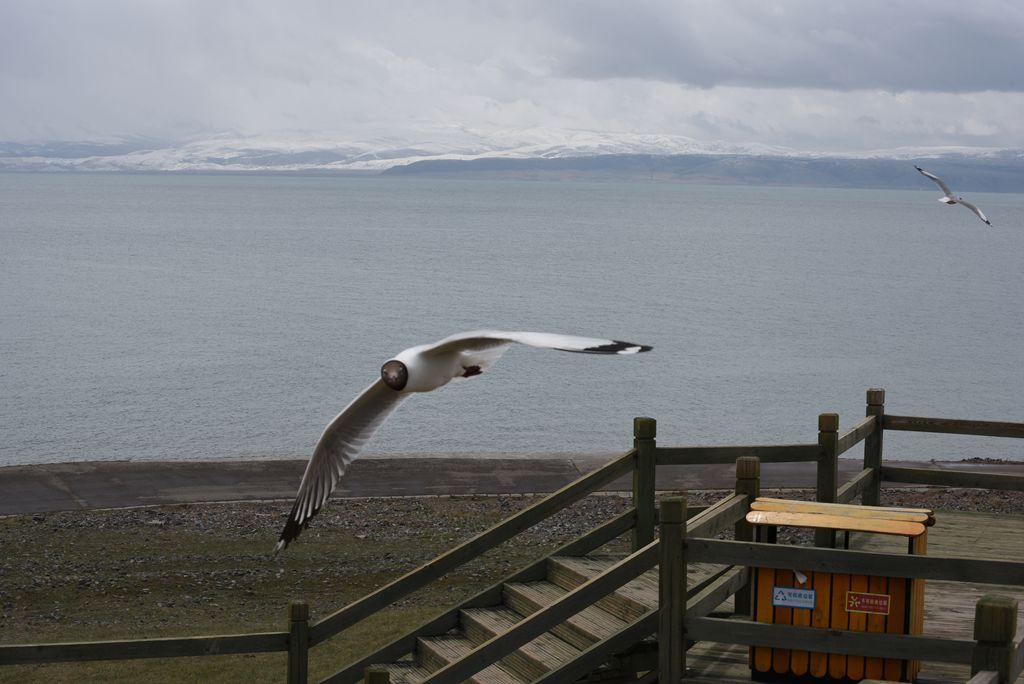 鸟岛 284.jpg