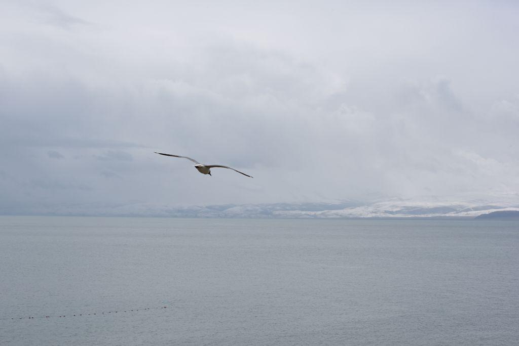 鸟岛 283.jpg
