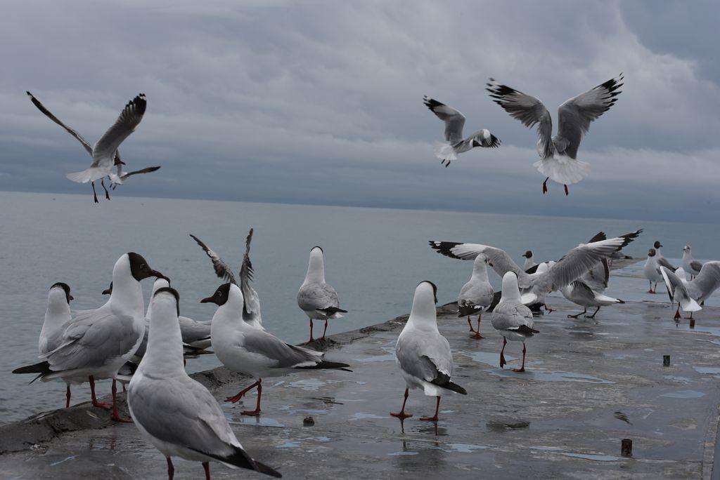 鸟岛 237.jpg