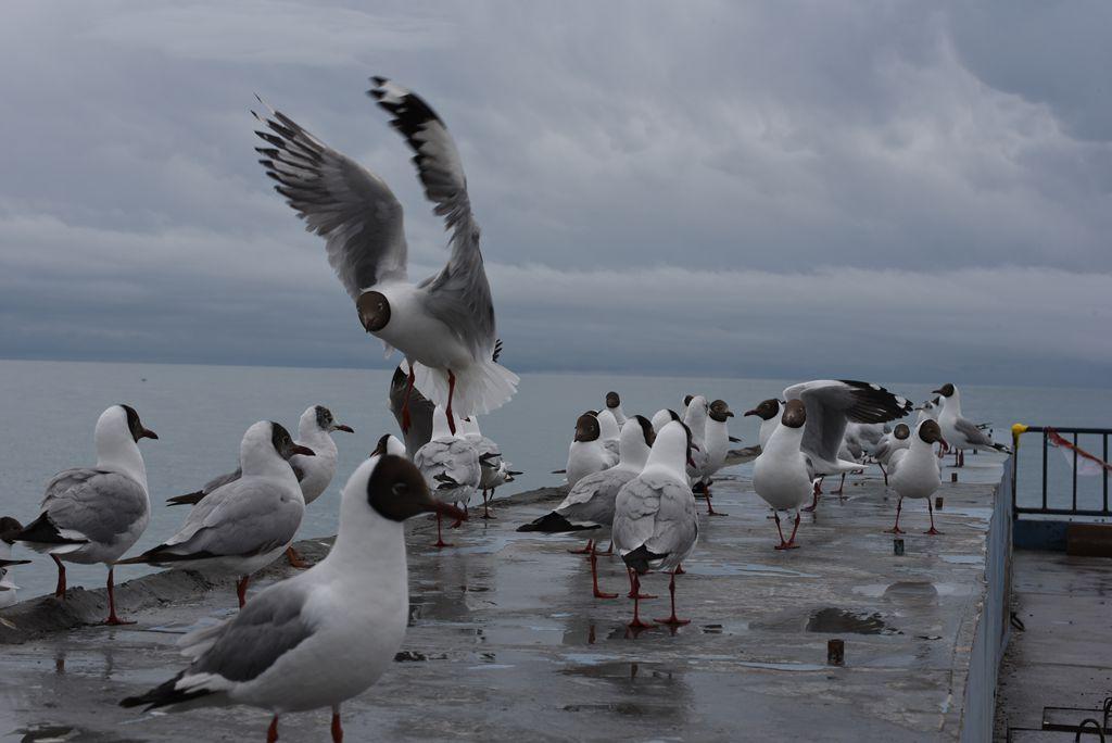 鸟岛 230.jpg