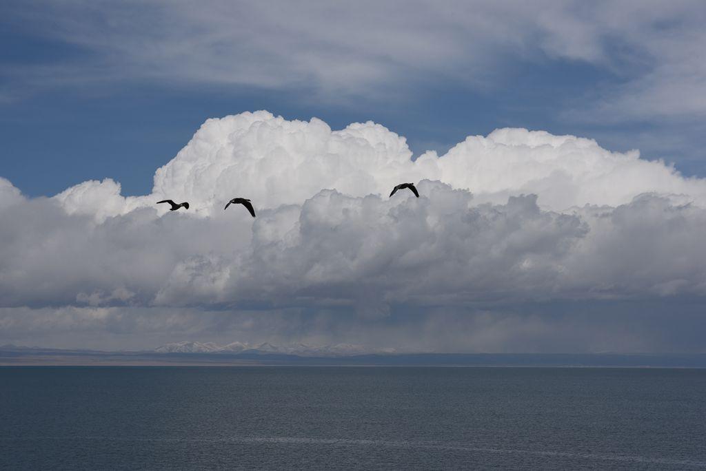 鸟岛 400.jpg