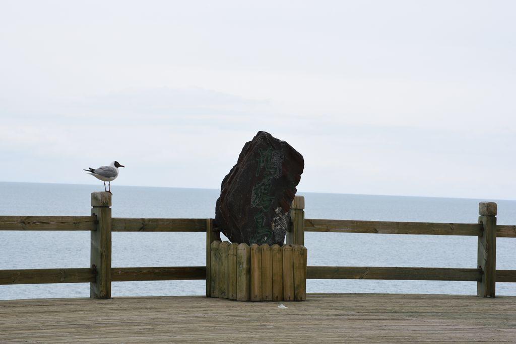 鸟岛 398.jpg