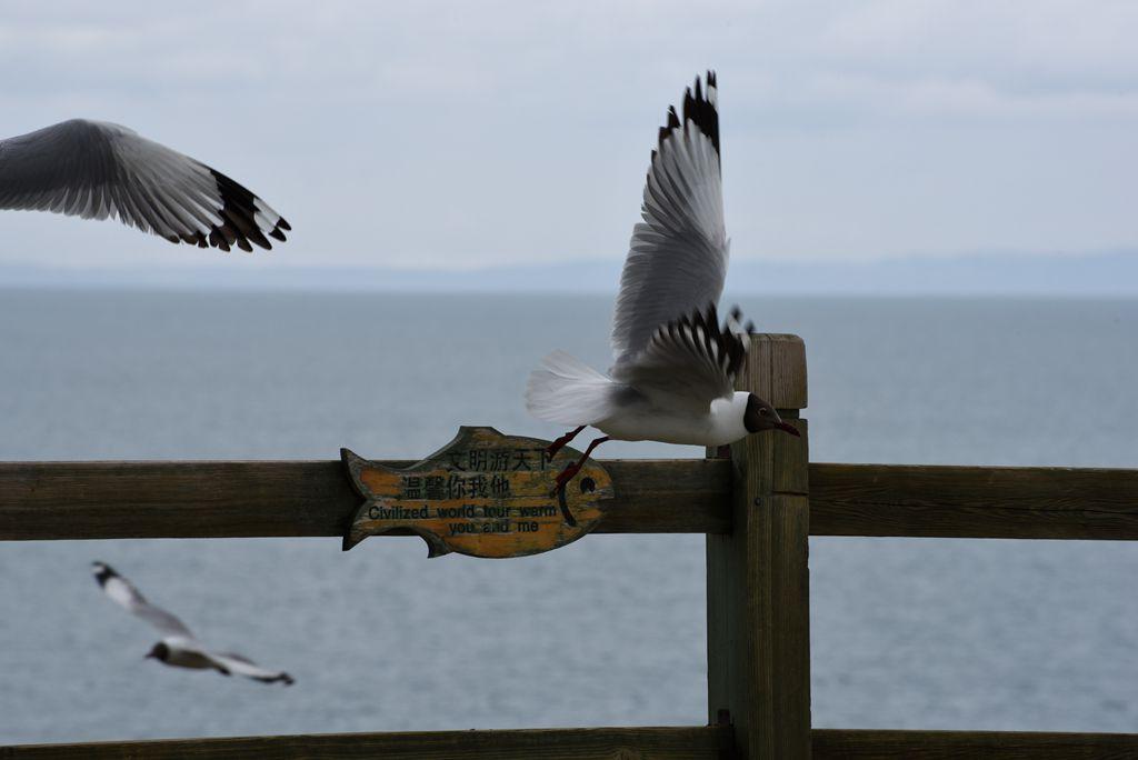 鸟岛 397.jpg