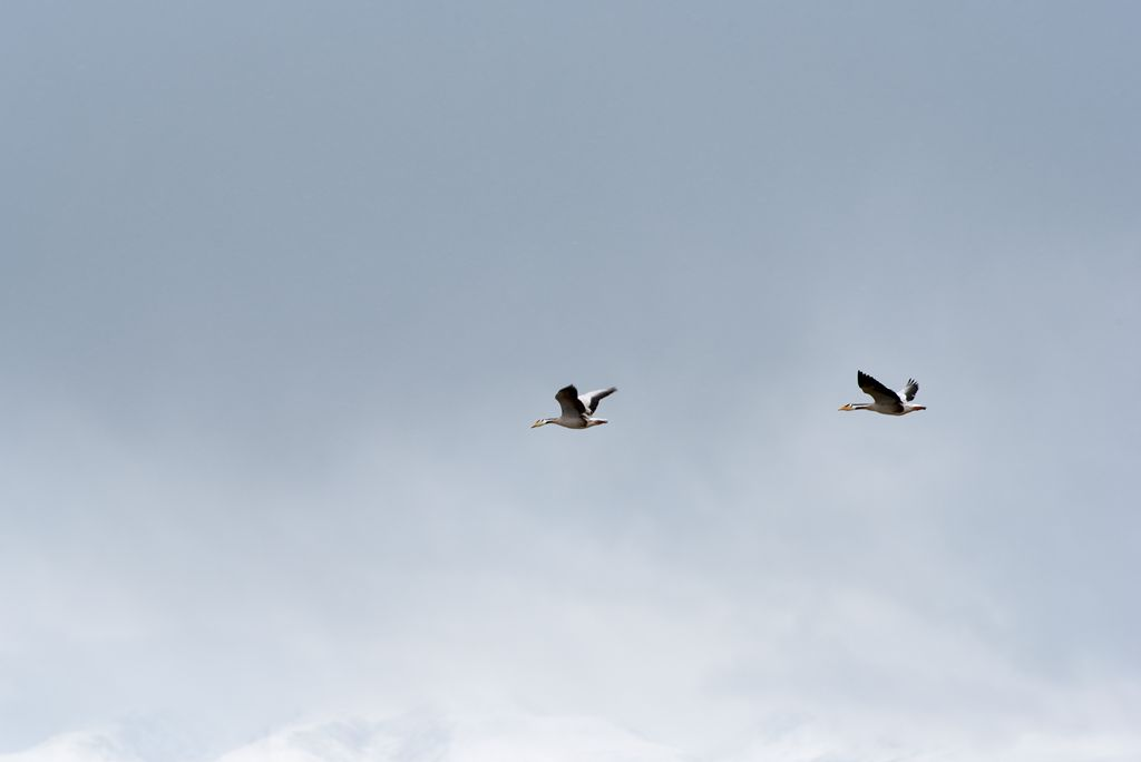 鸟岛 412.jpg