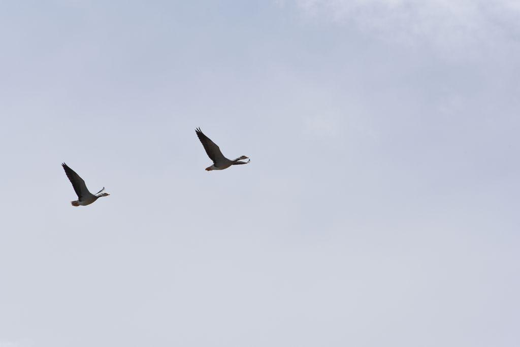 鸟岛 472.jpg