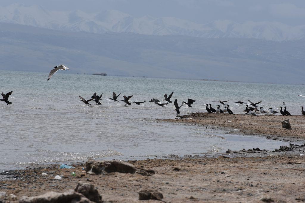鸟岛 468.jpg