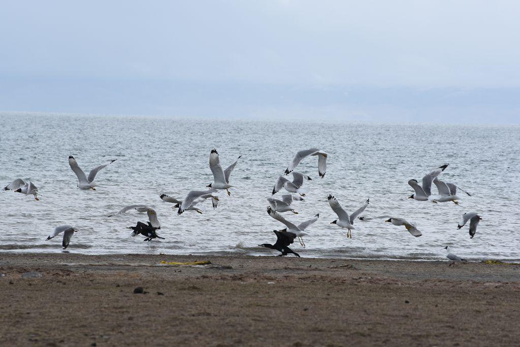 鸟岛 461.jpg