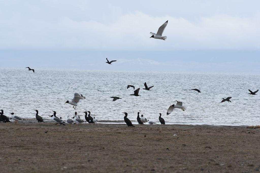 鸟岛 459.jpg