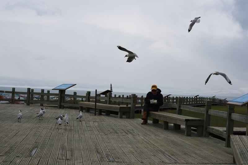 鸟岛 366.jpg