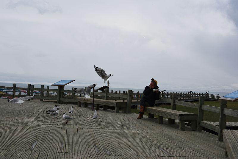 鸟岛 364.jpg