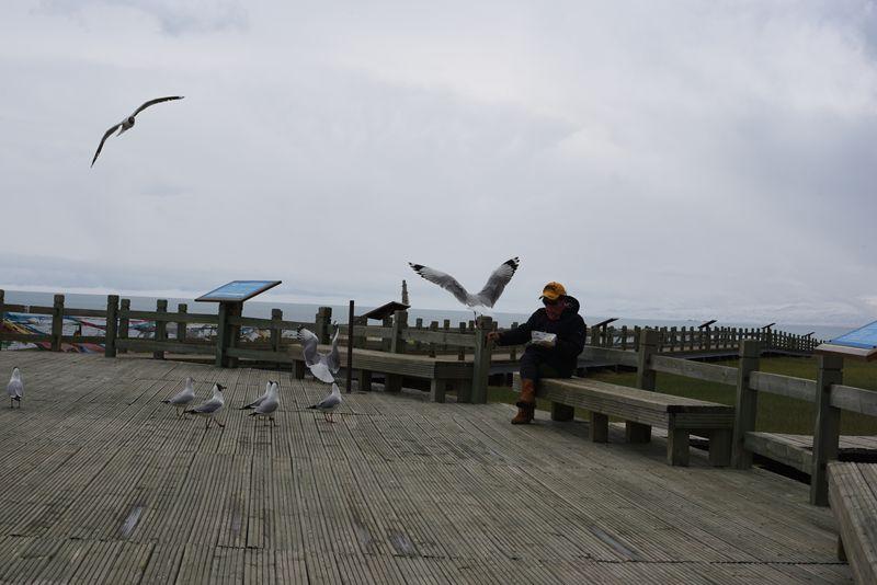 鸟岛 363.jpg