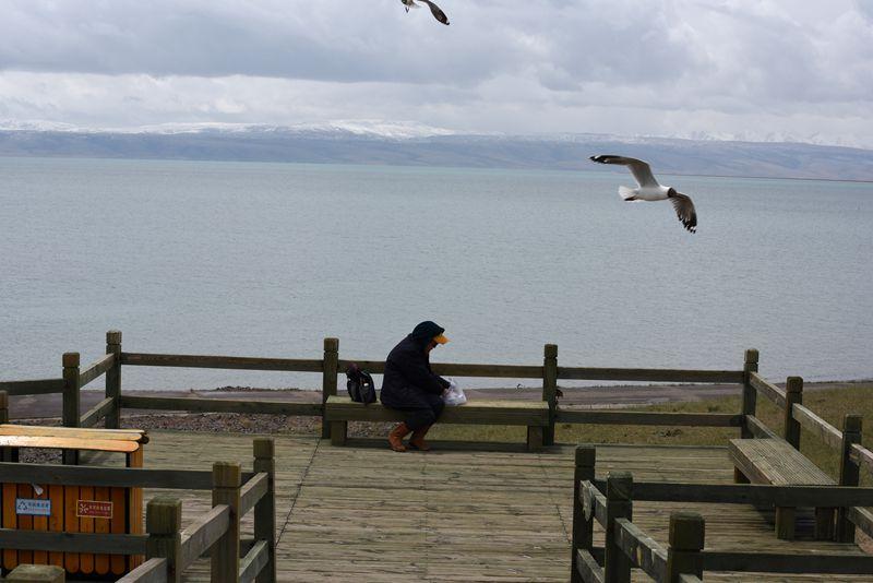 鸟岛 286.jpg
