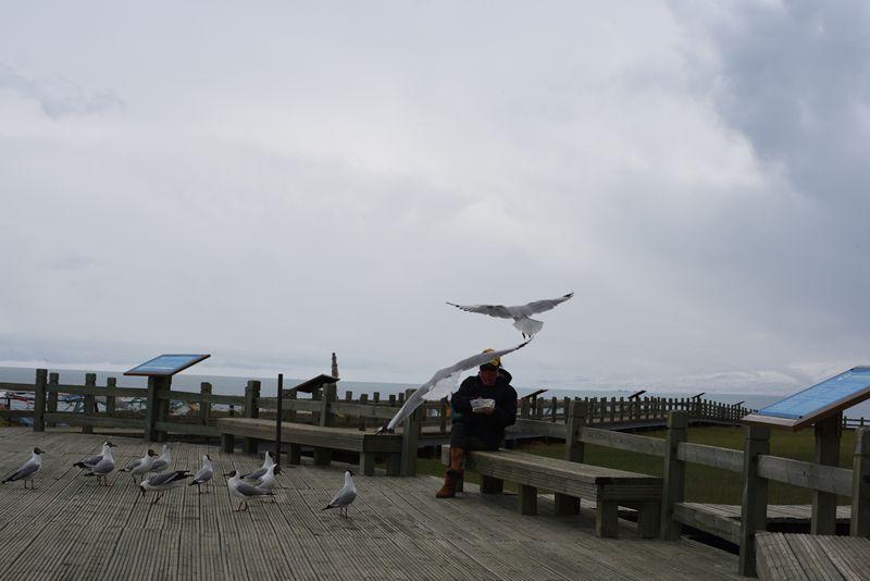 鸟岛 378.jpg