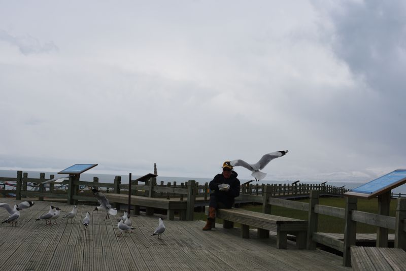 鸟岛 377.jpg