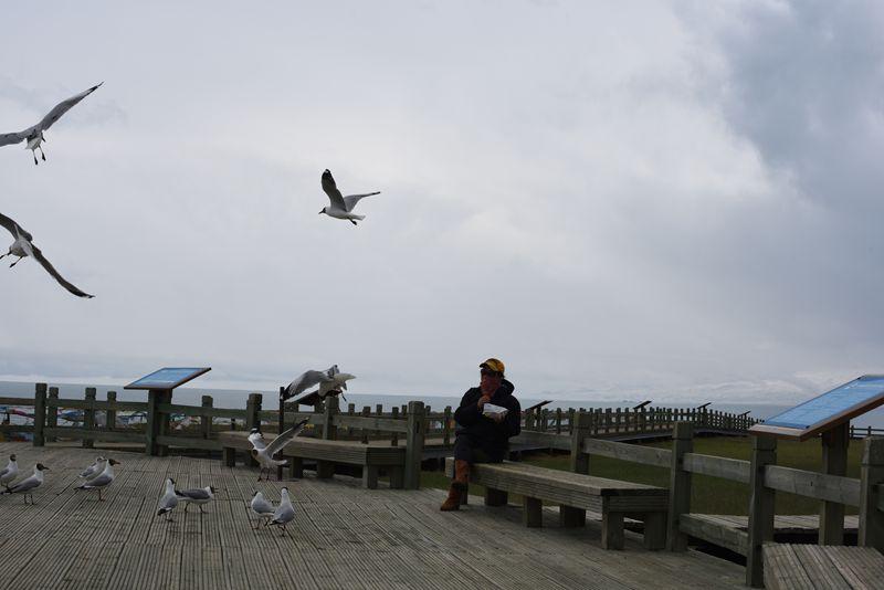 鸟岛 376.jpg