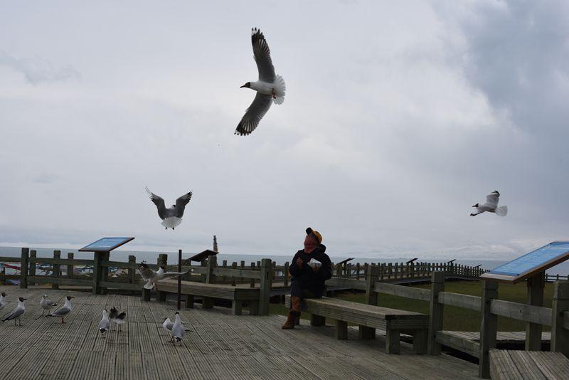 鸟岛 375.jpg