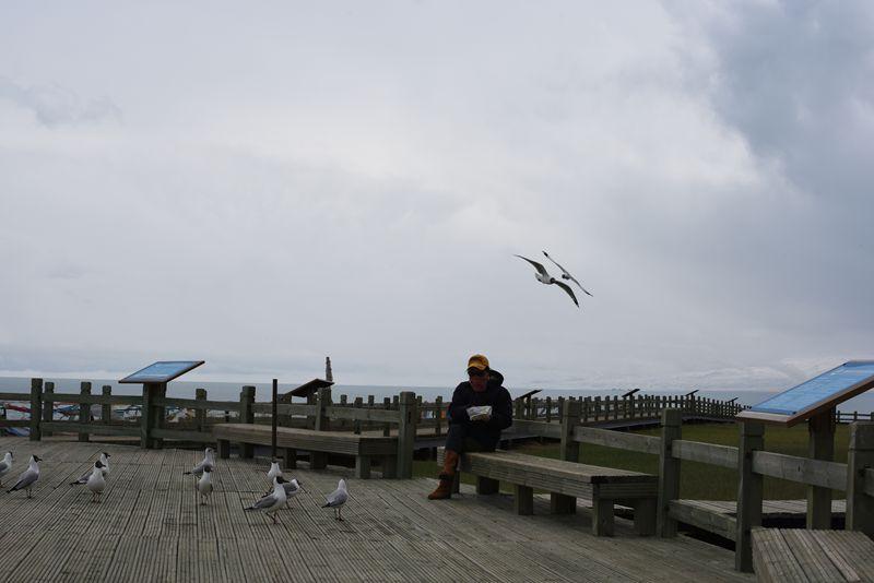 鸟岛 374.jpg