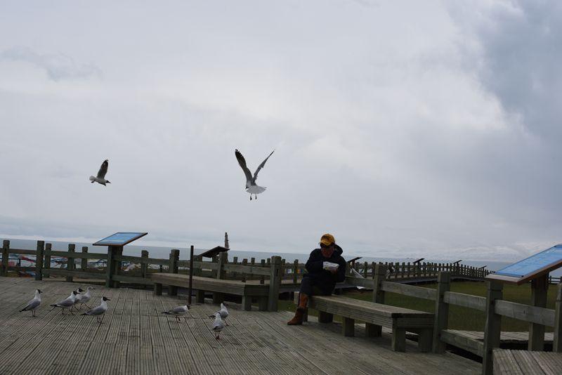 鸟岛 373.jpg