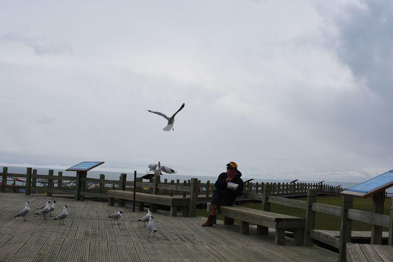 鸟岛 372.jpg
