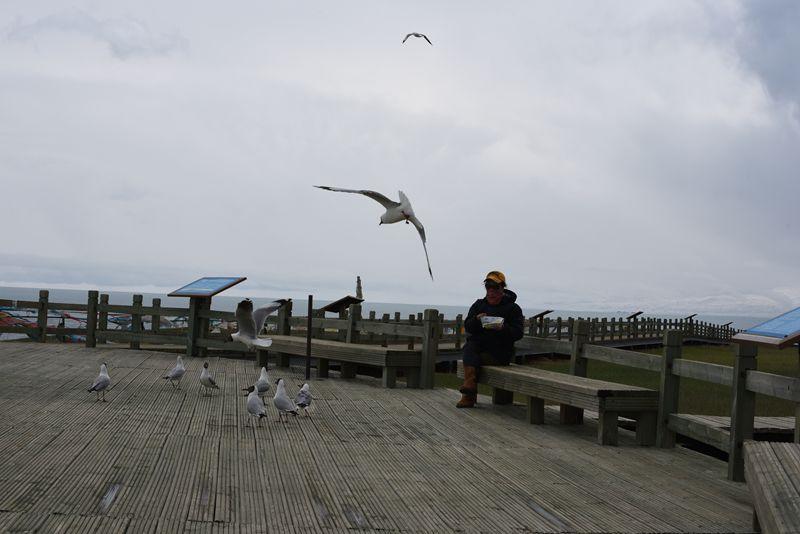 鸟岛 367.jpg