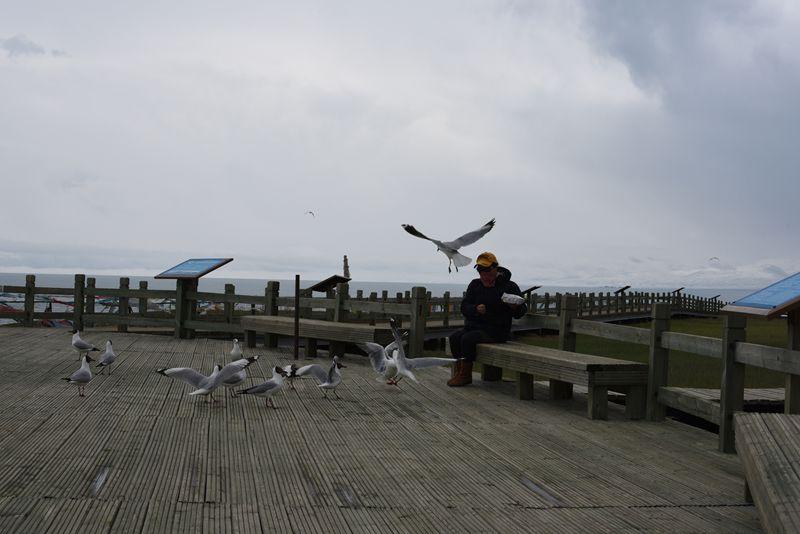 鸟岛 394.jpg