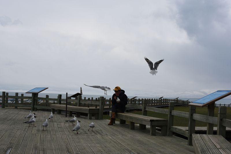 鸟岛 383.jpg
