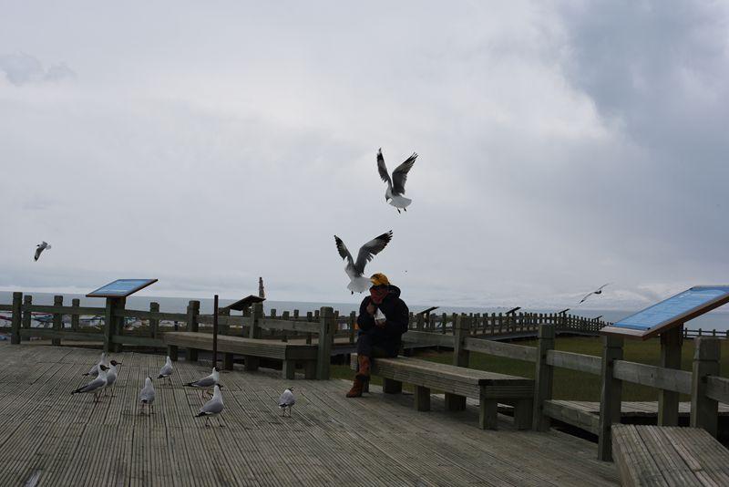 鸟岛 382.jpg